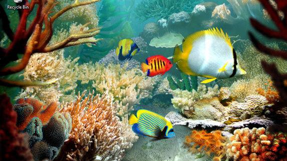 fische 3d bildschirmschoner  tropical fish  einzigartige
